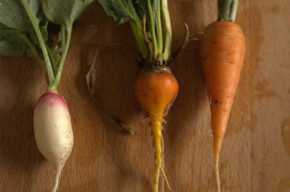 Radish, Beet and Carrot